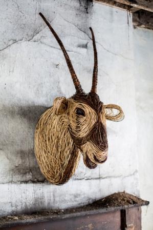 Oryx Trophy Head