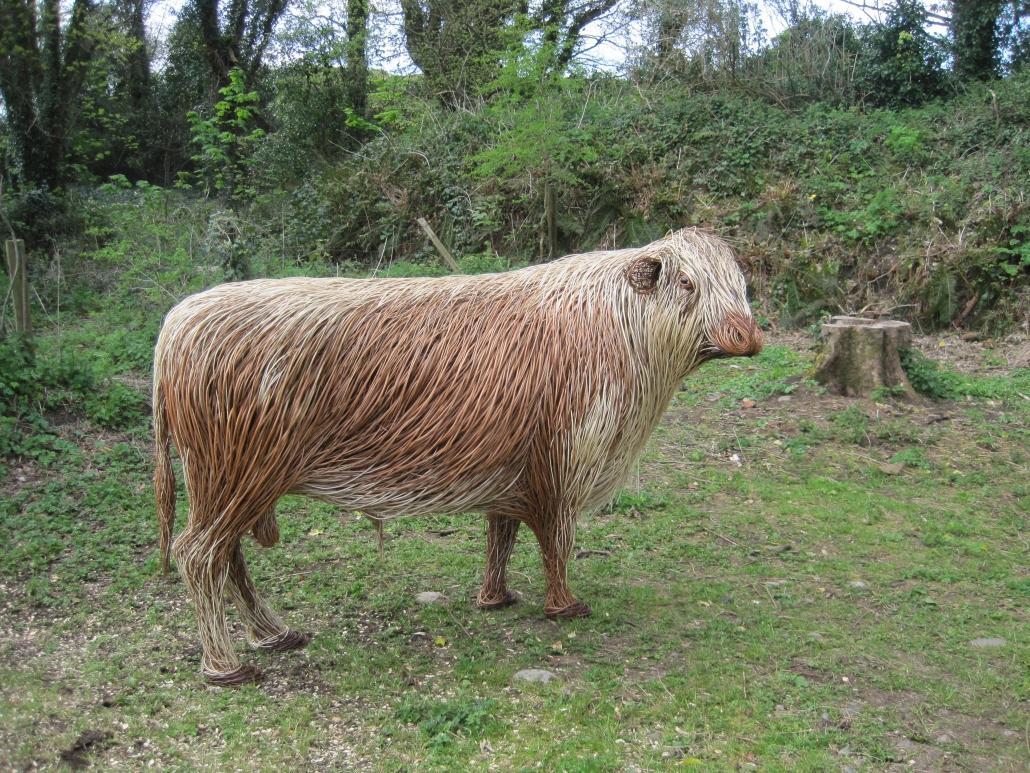 Irish Moiled Bull